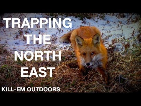 Trapping The North East