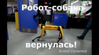 Судьбинушка двух новых роботов-собак из BostonDynamics (озвучка , много мата)