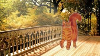 #Оранжевый кот_Самый лучший ролик про кота