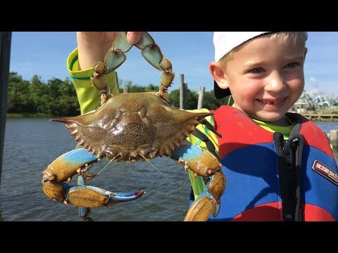 Cranking up crabs with incredible underwater video