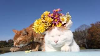 のせ猫 x 菊の花