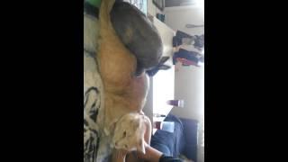 Rabbit humping my cat