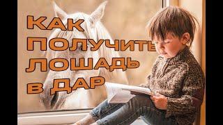 Лошадь. Топ 5 удивительных мягких методик взаимодействия. Лошадь в биосферном поселении.