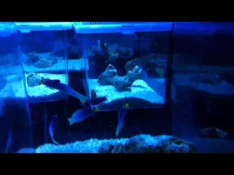 Exotic Reef Marine Imports