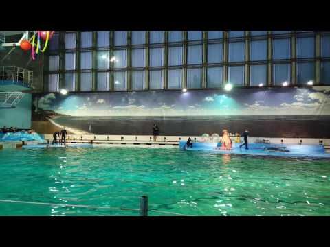 Дельфинарий в СПБ на Крестовском острове 04.01.17