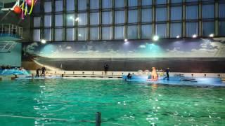 Дельфинарий в СПБ на Крестовском острове 04.01.17(5-ти минутка из дельфинария., 2017-01-04T21:42:56.000Z)
