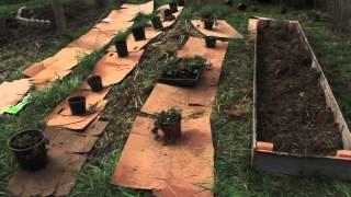 Raised Garden Beds Part 1 Of 3
