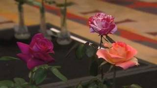 Meet the American Rose Society
