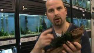 Aquarium Planting - Tips and Advice by Pondguru