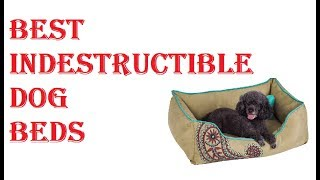 Best Indestructible Dog Beds 2020