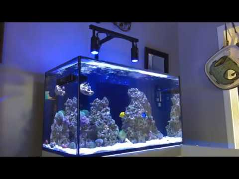 Red Sea Reefer Replay | Aquarium Discussion | FRESH Water Change