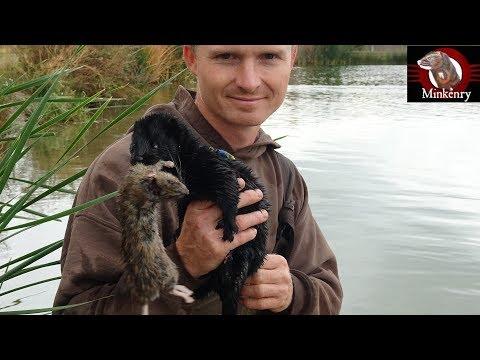 Episode 8- Mamba the Rat Slayer! | Black Mamba: Born to Hunt