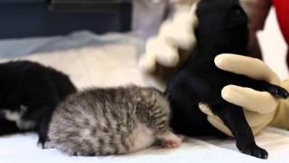NEWROOM24: Кошка выкармливает двоих щенков и котенка