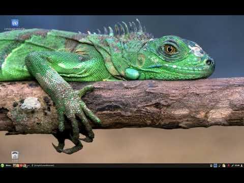 Gecko Linux com Cinnamon pt br