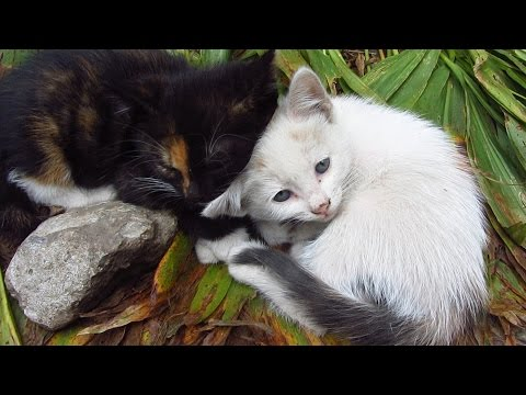 White cat with kitten and a day in the life of feeding cats
