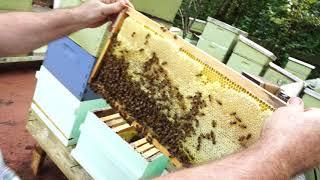 Пасека #98 Готова Семья к Зиме или Нет? Пчеловодство для начинающих