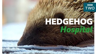 Looking after a Hedgehog - Hugh