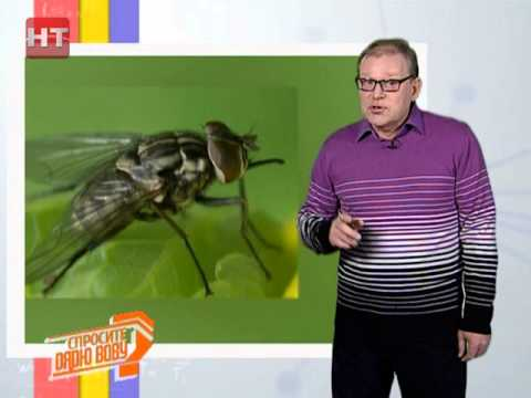 Вопрос: Когда мухи кусаются?