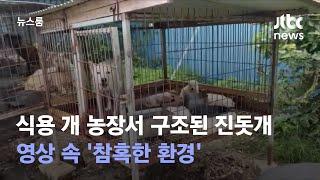 식용 개 농장서 구조된 진돗개…영상 속 '참혹한 환경'…
