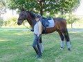 Faszination Pferd - Red Pony WG, Uvex und Pony´s