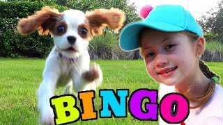 Bingo Song - Children Songs with my puppy