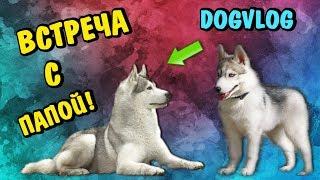 DOGVLOG: ВСТРЕЧА С ПАПОЙ! Говорящая собака