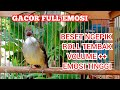 Teriakan Cucak Jenggot Jantan Gacor Emosi Tinggi Kicau Pidong  Mp3 - Mp4 Download