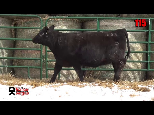 Kaiser Angus Ranch Lot 115