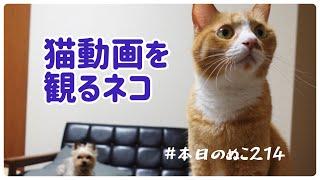 犬と猫 #猫のウラ #本日のぬこ 最近見るようになった猫動画、何気におすすめ動画を観ていると ウラの様子が変…ほかの猫をほとんど知らず、本格的な猫の威嚇を見るの ...