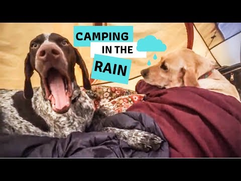 Camping with Dogs in the Rain // Big Basin