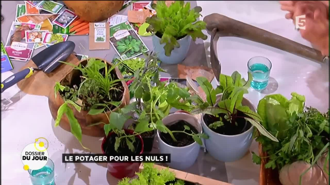 Legumes A Mettre Dans Le Jardin dossier du jour : je veux un potager chez moi !