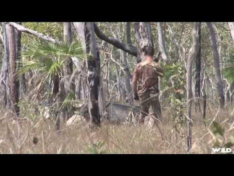 Spear Hunting Water Buffalo In Australia Part 2