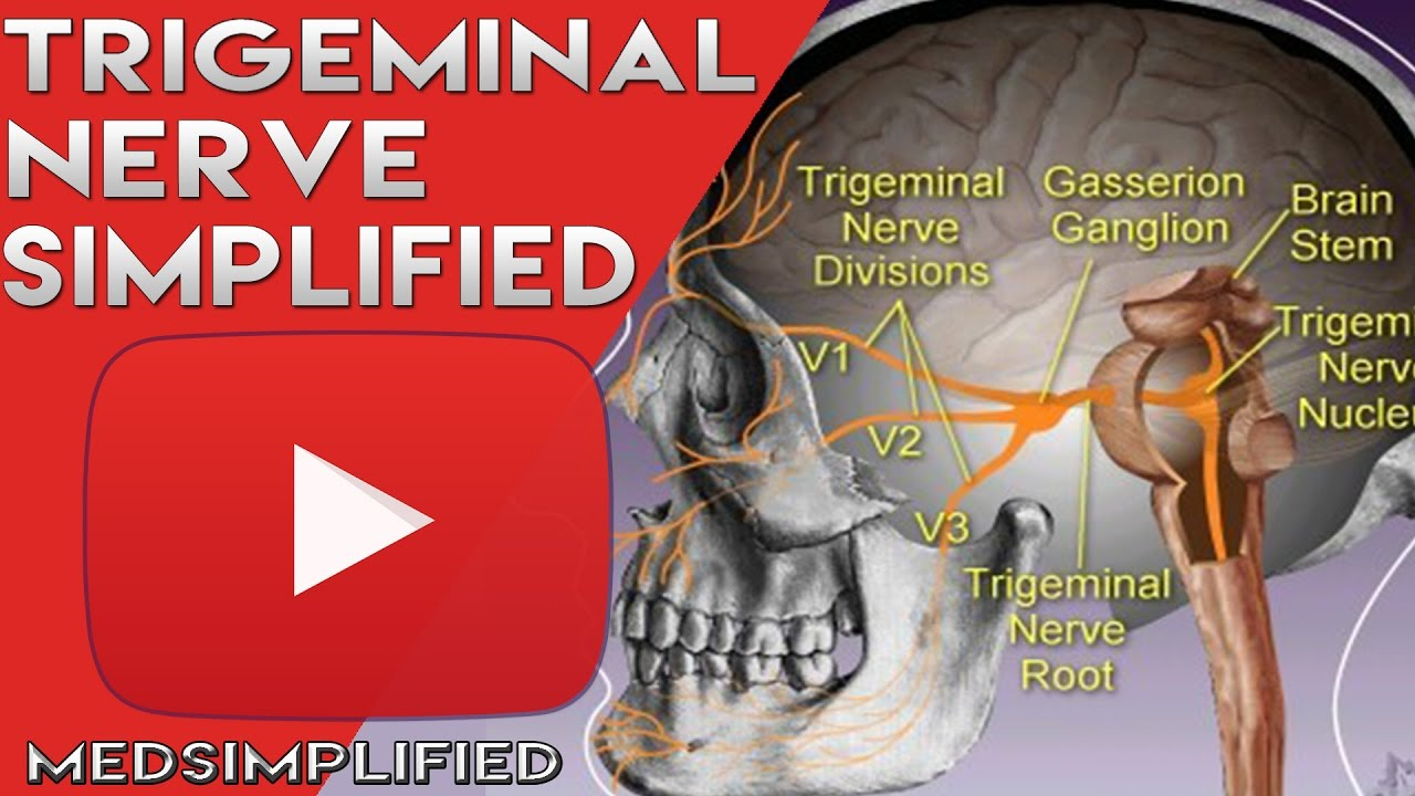 Trigeminal Nerve Anatomy - Cranial Nerve 5 Course and Distribution ...