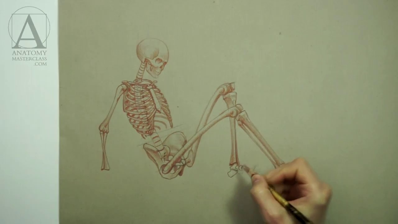 Female Anatomy For Artists Anatomy Master Class Video Lesson Youtube
