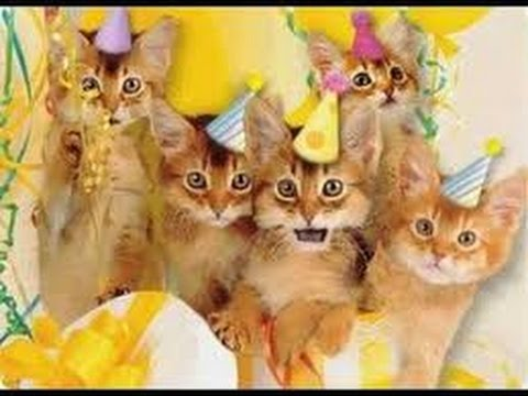 Kd Quotes Wallpaper Epic Cat Party Cat Birthday Party Funny Cats