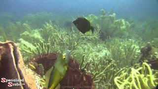 SCUBA Dive Coral Garden - Tobago