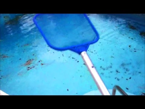 Leaf skimmer net pool cleaning basics lesson quick tip part 2