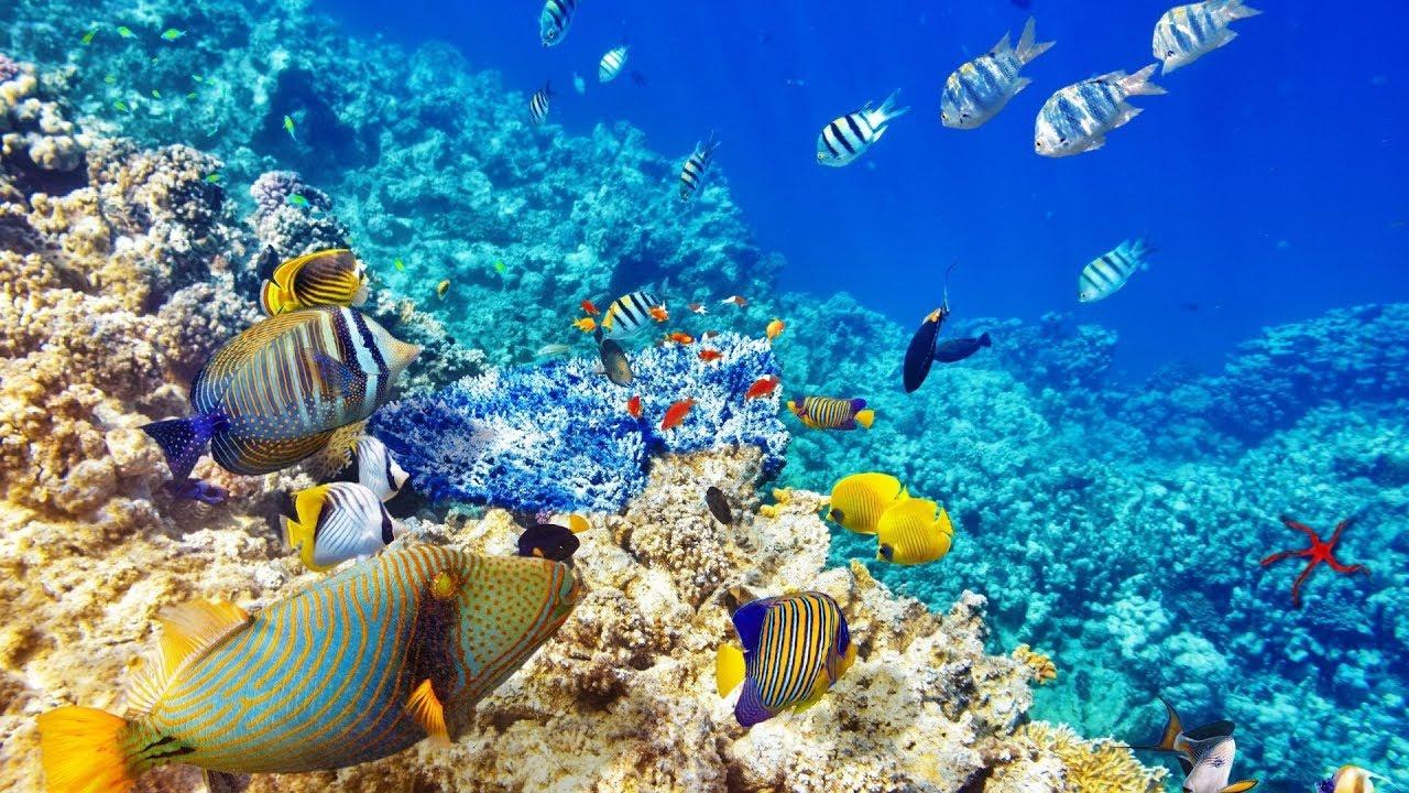 Красное море фото под водой отдельной емкости