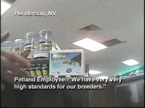 Petland Investigation: Pet Store Sells Puppy Mill Dogs - YouTube