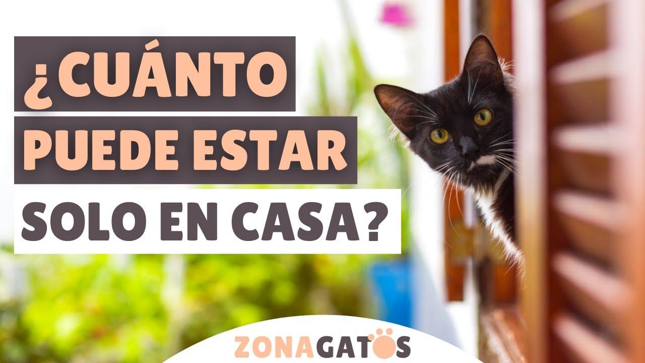 ¿CUÁNTO TIEMPO puede estar un gato SOLO EN CASA? ⏰