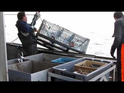 Lobster Fishing 5 Miles Off Of Yarmouth Nova Scotia