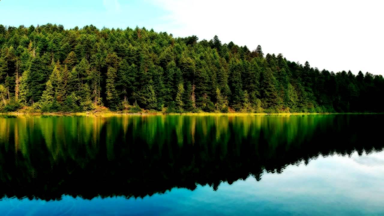 скачать бесплатно звуки летнего леса