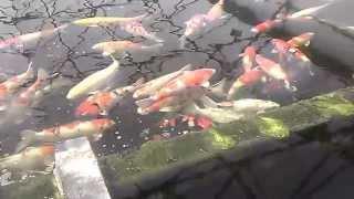 fish farm, south jersey.