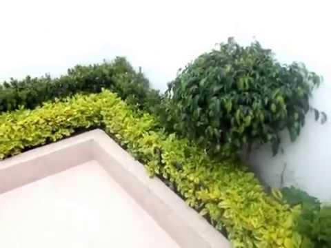 Jardinera decorada con duranta arrayan y un ficus youtube for Planta arbustos para jardineras