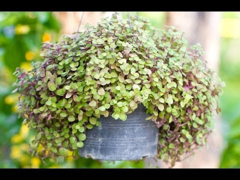 Container Gardening Ideas - YouTube
