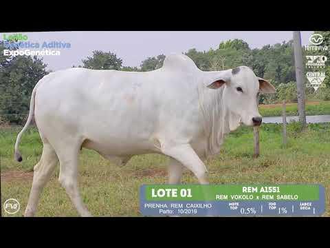 LOTE 01 - Leilão Genética Aditiva ExpoGenética 2019