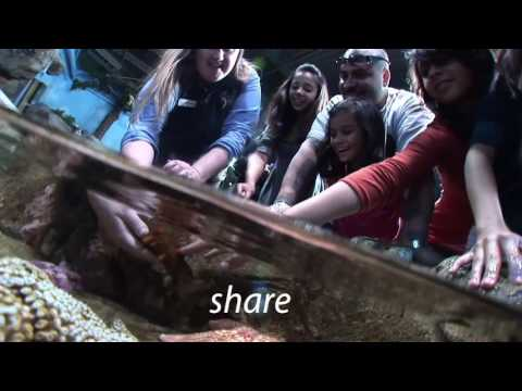 Aquarium of the Bay Admission - Video