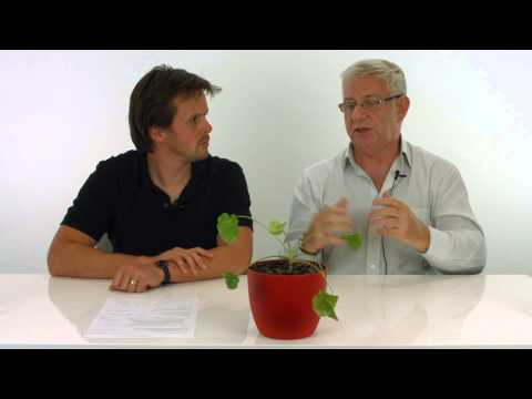 How Outsourcing To The Philippines Saved My Business - Mike O'Hagan Mini Movers