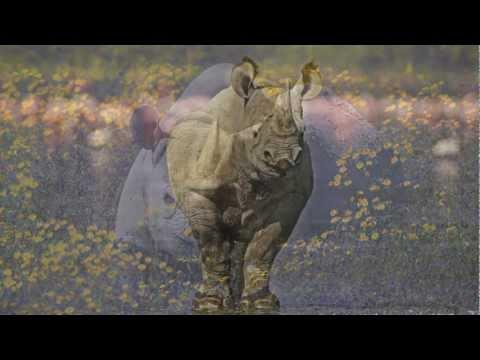 African rhino poaching crisis | WWF