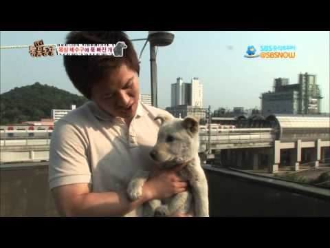 SBS [동물농장] - 617회 옥상 배수구에 푹 빠진 개外